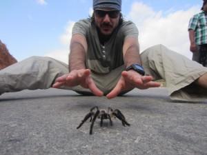 Travelzungu en Socotra persiguiendo arañas