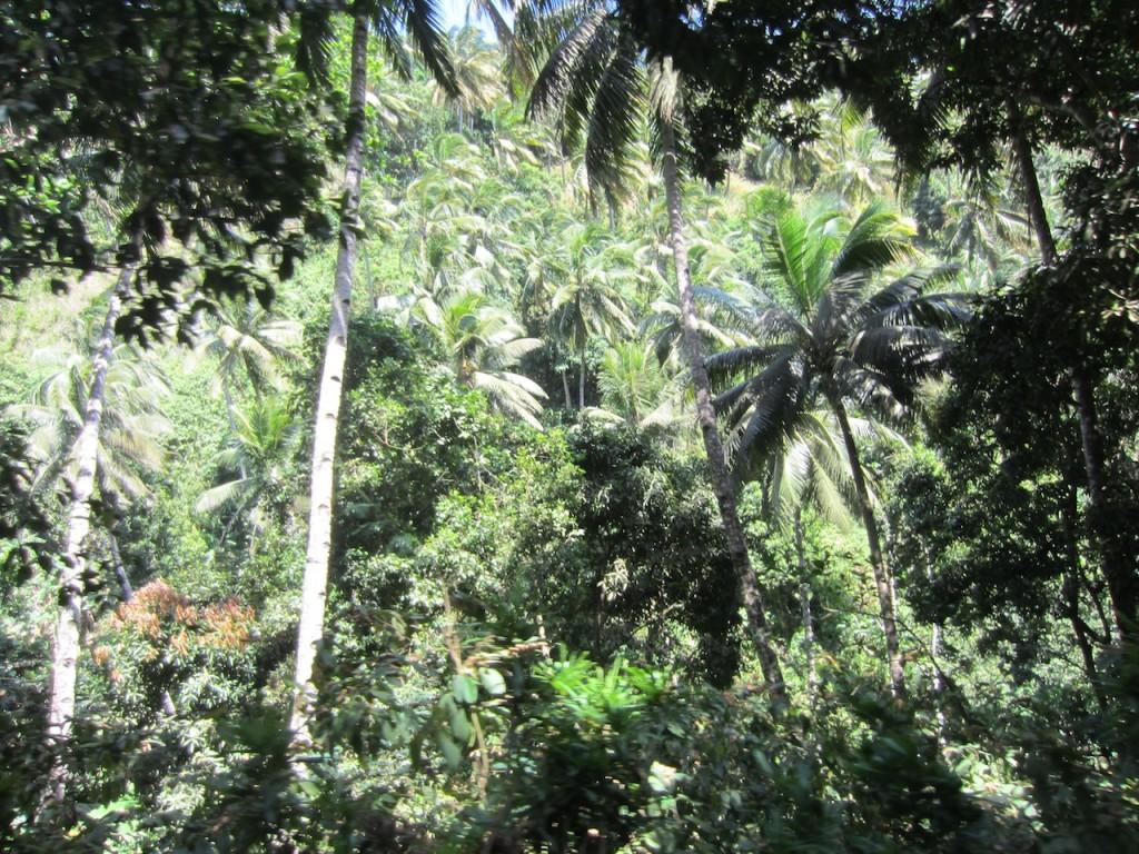 Camino a Moya, Anjouan, Comoras