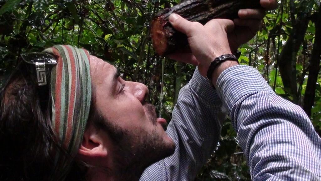 Bebiendo de árbol en selva