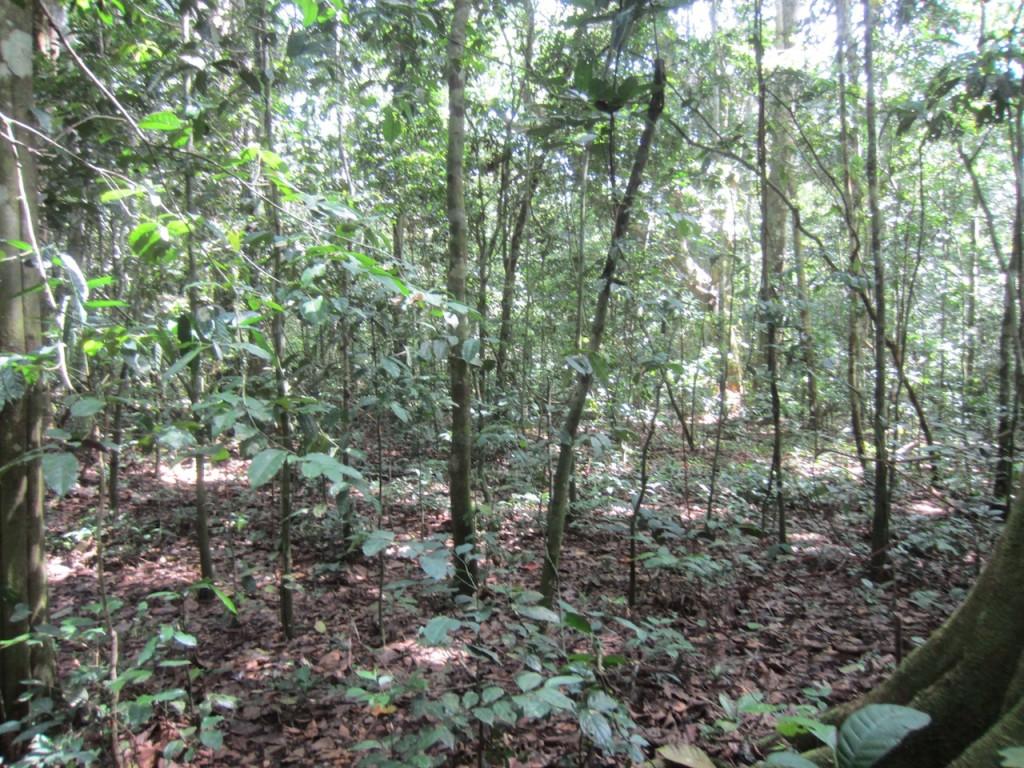 Selva en RCA