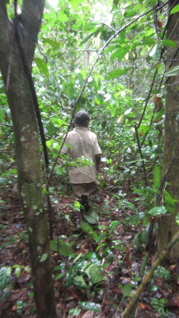 Guía pigmeo en la selva